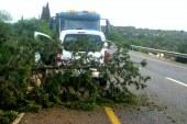 הסופה הפילה עצים שחסמו את כביש 854